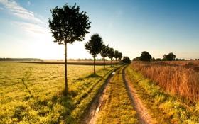 Картинка дорога, поле, деревья, пейзаж