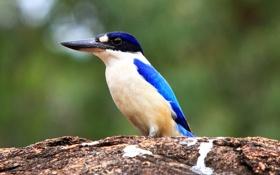 Картинка природа, птица, камень, цвет, клюв