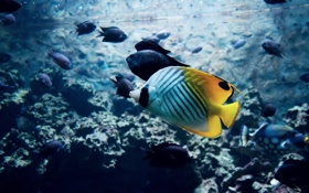 Обои вода, рыбки, рыба, яркая, тропические