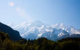 Картинка лес, небо, горы, птицы