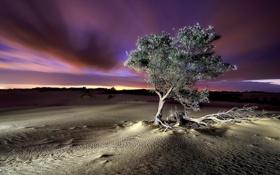 Картинка пейзаж, ночь, дерево, пустыня