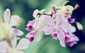 Обои цветок, бутон, лепесток