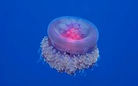 Картинка глубина, медуза, вода, море, океан