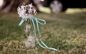 Обои трава, цветы, бутылка, лента