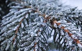 Картинка зима, снег, снежинки, ветки, ель, snow, Winter has come