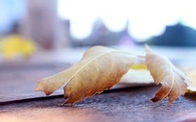 Обои макро, лист, листок