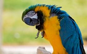 Обои птица, краски, перья, клюв, попугай