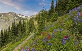 Обои трава, деревья, пейзаж, горы, природа, ель, тропа