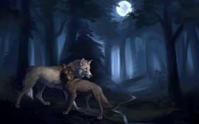 Обои лес, ручей, луна, пара, волки
