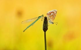 Обои цветок, стрекоза, макро, бабочка