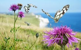 Обои цветок, растение, природа, бабочка, сорняк, мотылек