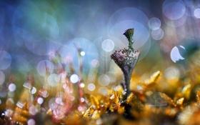 Картинка макро, природа, растение, фокус