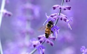 Обои цветок, макро, пчела, насекомое