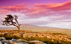Обои камни, долина, небо, дерево