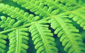 Обои зелень, листья, макро, природа, фото, обои, растение