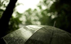 Обои макро, дождь, зонт, 2560х1600