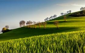 Картинка поле, небо, деревья, холмы