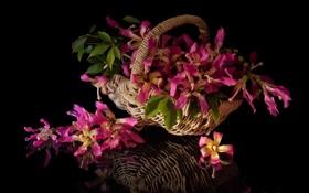 Картинка цветы, корзина, букет, розовые, цветение, нежно