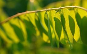 Картинка лето, свежесть, листок, весна, листочки, листочек, листки