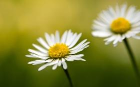Картинка макро, цветы, природа, фото, пыльца, стебли, обои
