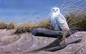 Обои сухая трава, птицы, песок, Wilhelm J. Goebel, Against the Wind, живопись, сова