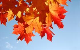 Обои осень, листва, Sweet November
