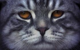Картинка глаза, кот, усы, взгляд