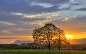 Картинка природа, поле, закат, деревья