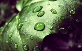 Картинка вода, капли, лист, Макро