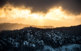 Обои зима, лес, небо