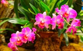Обои листья, орхидея, лепестки, оранжерея