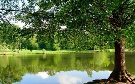 Обои пруд, парк, дерево
