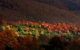 Картинка осень, лес, свет, деревья, горы, природа, Sarukura