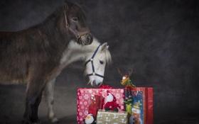Обои животные, праздник, новый год, рождество, лошади, подарки, пони