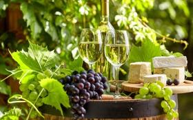 Обои зелень, листья, вино, бутылка, сыр, сад, бокалы