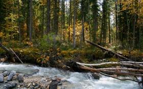 Обои лес, деревья, река, поток, river