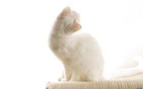 Картинка кошки, коты, cats