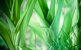 Обои трава, листья, зеленый, фон, обои, растения, широкоформатные