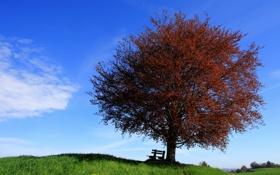 Обои небо, пейзаж, дерево, скамья