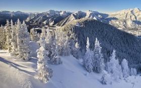 Картинка зима, Снег, Лес, Канада