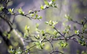 Обои весна, зелень, размытость, листья, деревья, ветви, природа