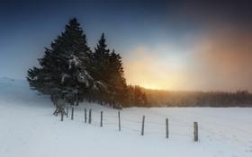 Картинка снег, туман, утро