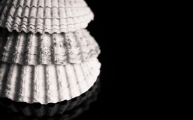 Обои поверхность, черно-белое, ракушки, раковины, монохромные, глянцевая