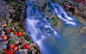 Обои листья, река, камни, поток