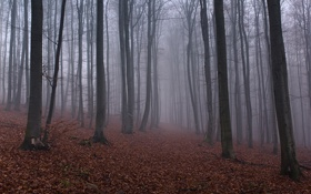 Картинка опавшие листья, лес, осень, деревья, туман