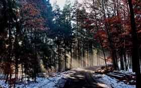 Обои зима, дорога, лес, лучи, свет, природа