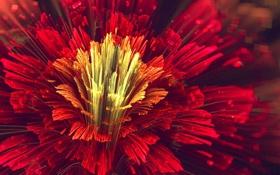 Обои арт, цветок, лепестки, красный