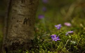 Картинка природа, лес, цветы