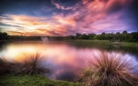 Обои лес, трава, озеро, зарево, grass, forest, glow