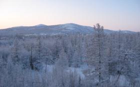 Обои зима, лес, рассвет, сопки, Тайга